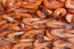 World's largest Shrimp Exporter faces heat - Overview and Outlook